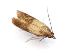 Sanopure d sinfection d sinsectisation d ratisation insectes alimentaires - Mite alimentaire ou textile ...